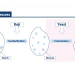 Yeast : SAKETIMES GLOSSARY