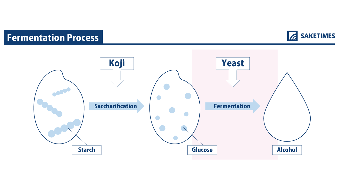infographic of yeast