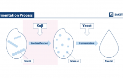 infographic of koji