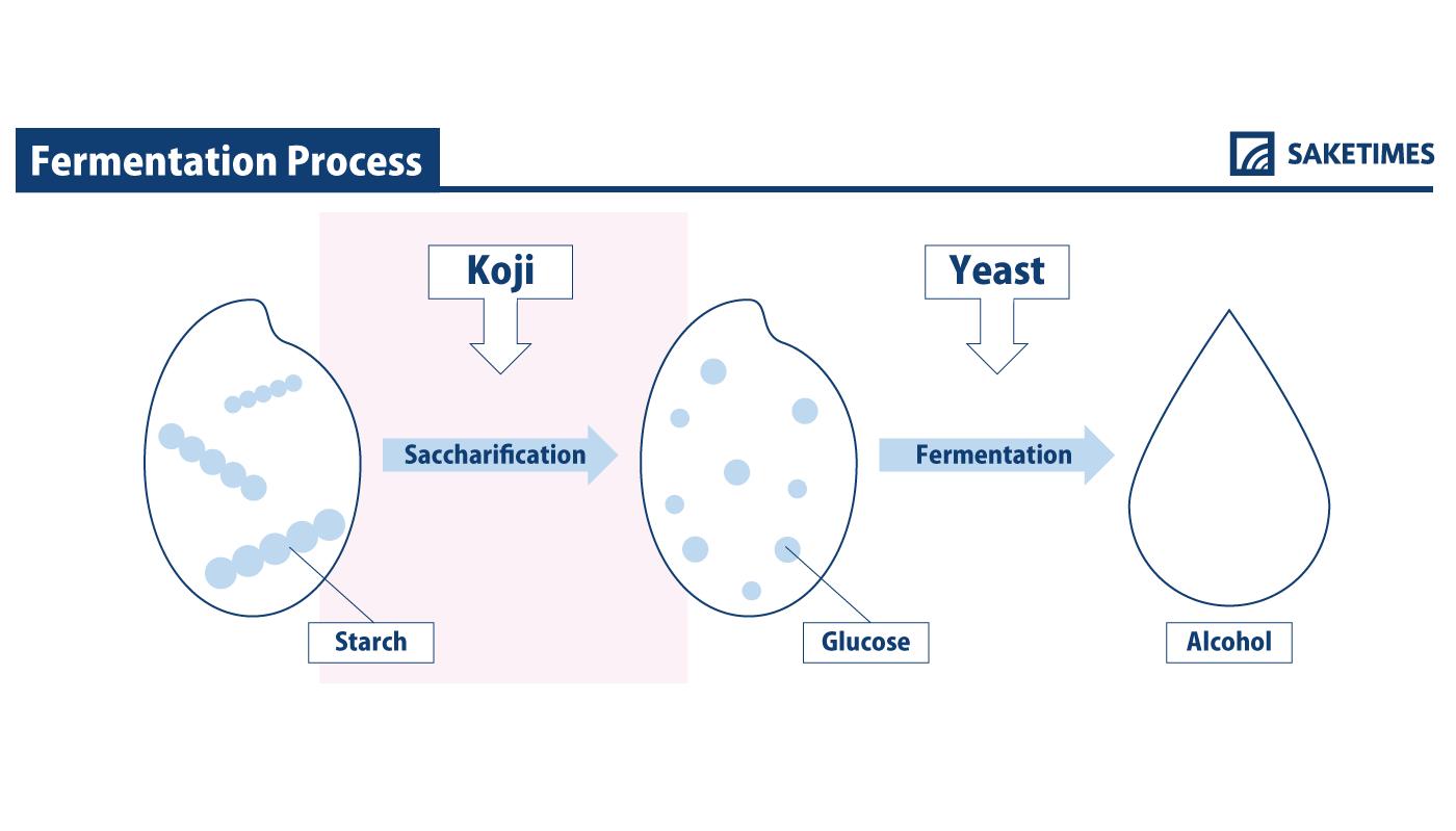 infographic of koji