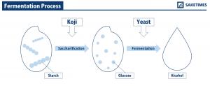 ermentation-process