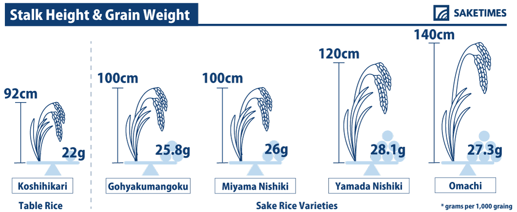 Stalk Height & Grain Weight of sakamai, sake rice