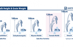Infographics of Yamada Nishiki