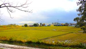 town of Shibata