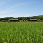 The Changing Face of Sake Rice Farming